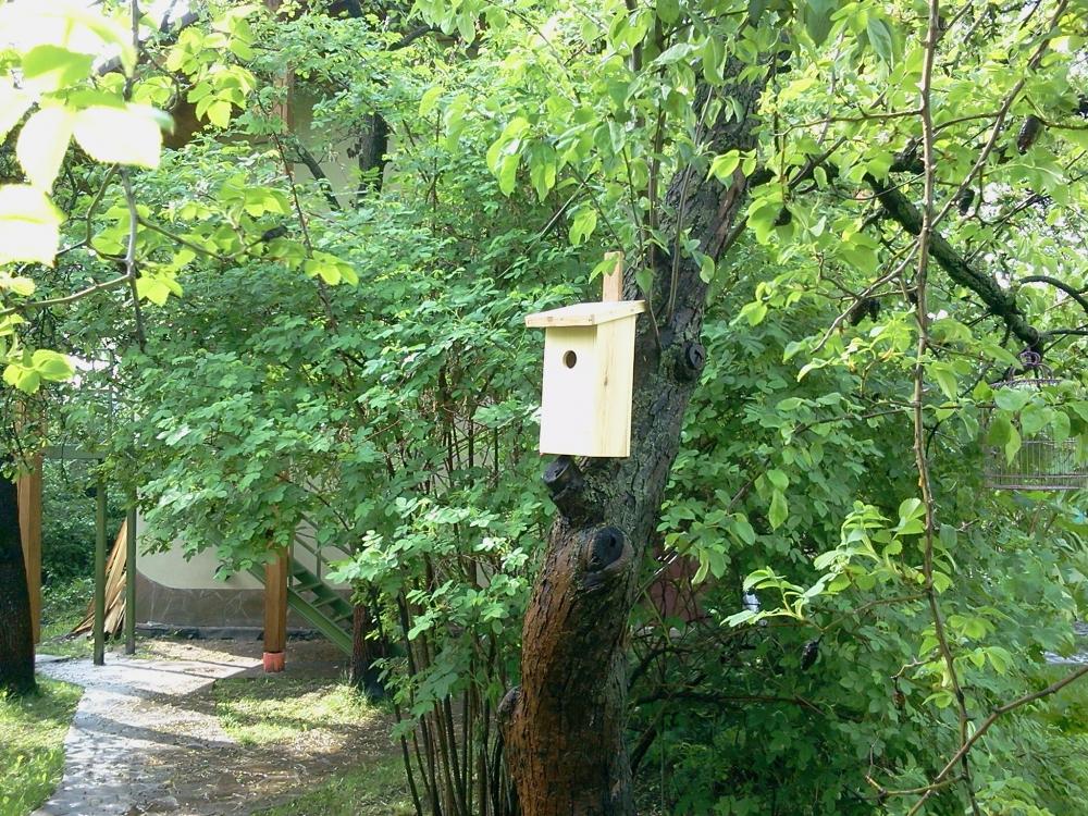 Birdhouse (1) - 3